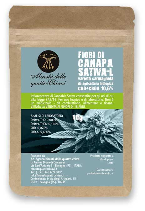 cannabis canapa sativa - L infiorescenze